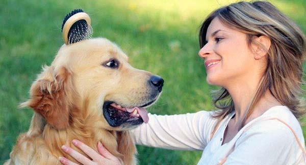 cuidados básicos mascota