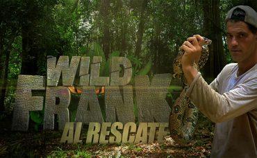 Programa de Will Frank