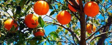 naranjas fuentes naturales de vitamina C